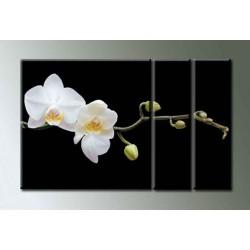 Орхидея - Модульная картины, Репродукции, Декоративные панно, Декор стен