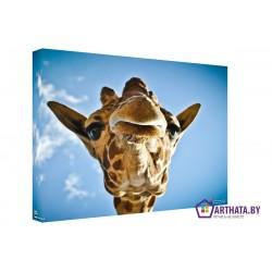 Господин Жираф