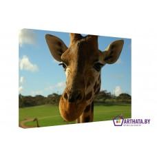 Картина на холсте по фото Модульные картины Печать портретов на холсте Грустный жираф