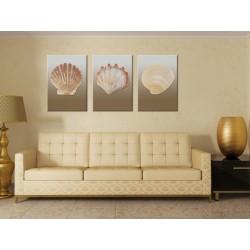Ракушки - Модульная картины, Репродукции, Декоративные панно, Декор стен