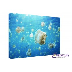 Медузы в океане