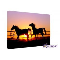 Лошади на закате