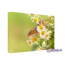 Картина на холсте по фото Модульные картины Печать портретов на холсте Полевая мышь