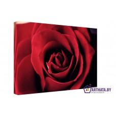 Картина на холсте по фото Модульные картины Печать портретов на холсте Яркая роза
