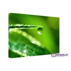 Картина на холсте по фото Модульные картины Печать портретов на холсте Зеленые листья