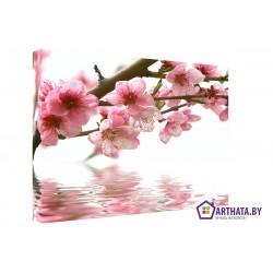 Сакура - Модульная картины, Репродукции, Декоративные панно, Декор стен