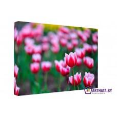 Картина на холсте по фото Модульные картины Печать портретов на холсте Мелодия тюльпанов