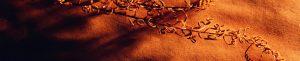 skinali-katalog-abstract-170