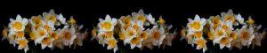 cvety-0047