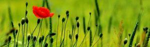 cvety-0055