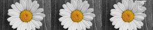 cvety-0438