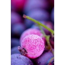 Фотообои - Дикая ягода
