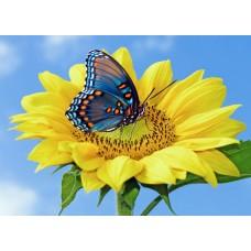 Фотообои - Бабочка на желтом цветке