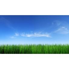 Фотообои - Зеленое поле - Синее небо