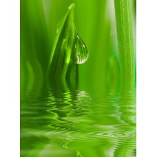 Фотообои - Трава в воде