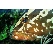Фотообои - Рыба