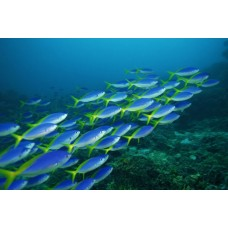 Фотообои - Косяк рыб