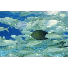 Фотообои - Голубой океан