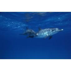 Фотообои - Дельфин