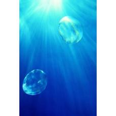 Фотообои - Медузы в океане