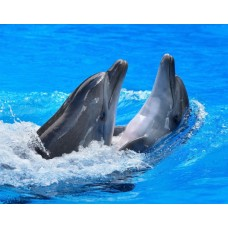 Фотообои - Игра дельфинов