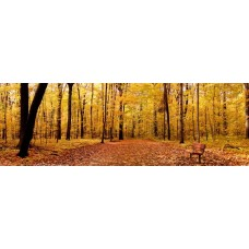 Фотообои - Осенний лес - Фотообои