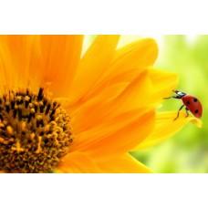 Фотообои - Желтый цветок