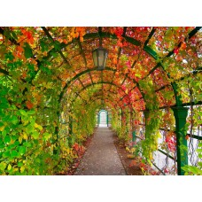 Фотообои - Осень