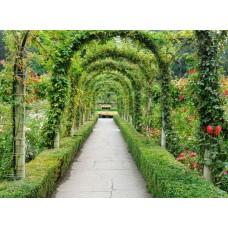 Фотообои - Зеленая алея