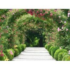 Фотообои - Вход в сад