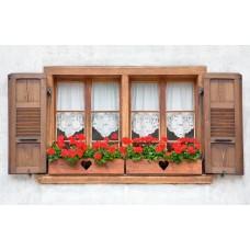 Фотообои - Цветы в горшках за окном