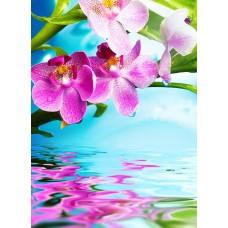 Фотообои - Орхидея над водой