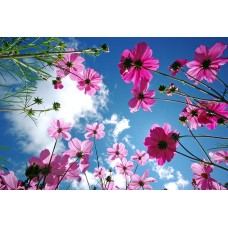 Фотообои - Луговые цветы - Фотообои